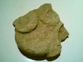 Lapor s fosilima