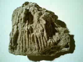 Vapnenački fosil